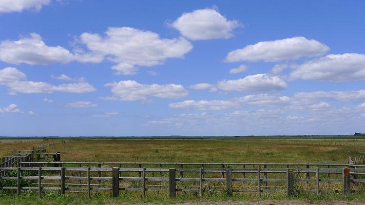 les-prairies-au-bord-de-la-briere-et-du-brivet-saint-malo-de-guersac-1393630