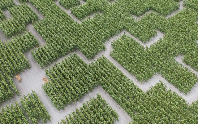 pvue-ay-rienne-3-pop-corn-labyrinthe