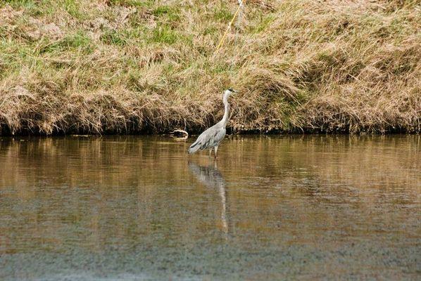 trugatu-oiseaux-584755