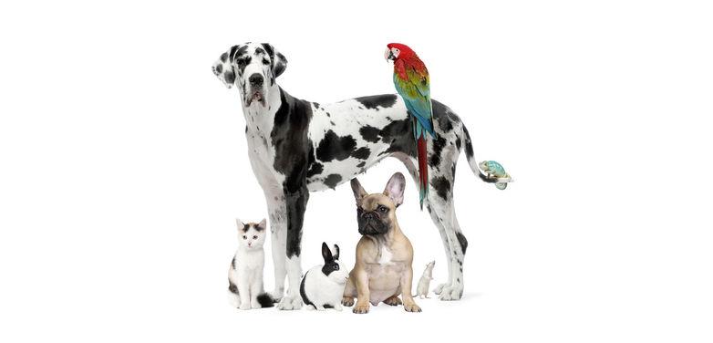 veterinaire