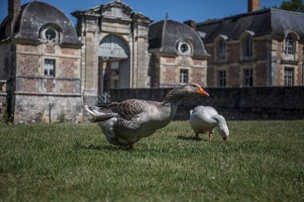 Chateau LFSA 8