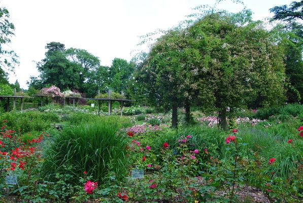 Roseraie du Parc Floral de la Source, Orléans-Loiret_rosiers rouges et pergolas©Parc Floral de la Source, Orléans-Loiret
