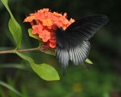 Serre aux papillons_4©Parc Floral de La Source, Orléans-Loiret