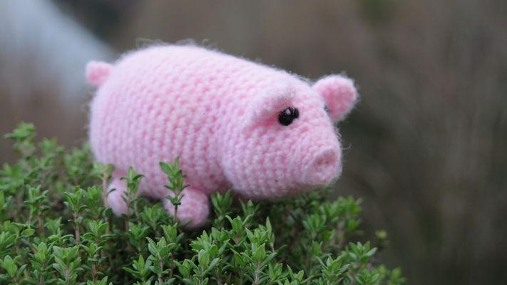 5 - Cochon