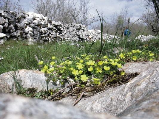 Pelouse sèche fleurie dans la Brauhnie