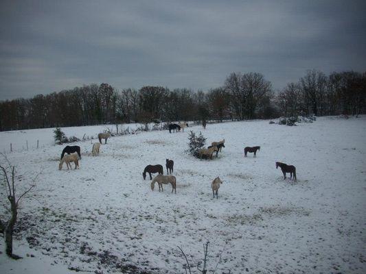 Ferme équestre du Cheval Blanc - Lacapelle marival