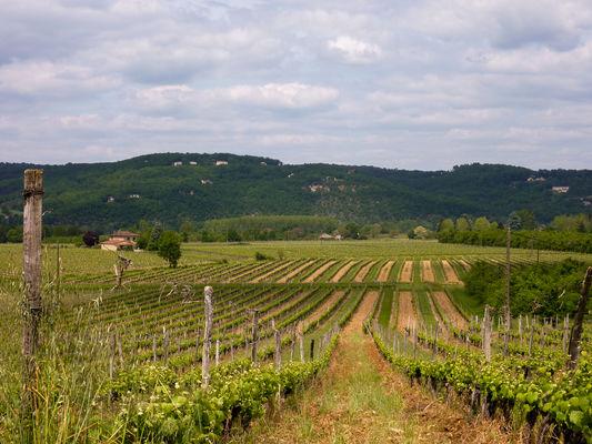 03Labrande -  Entre vignes et vallée© Lot Tourisme - C. Sanchez