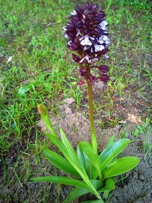 04 Aire naturelle les grands chênes