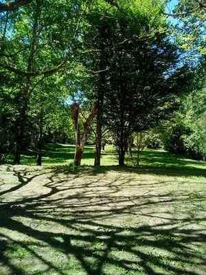 05 Aire naturelle les vieux chênes