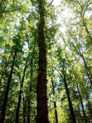 06 Aire naturelle les grands chênes