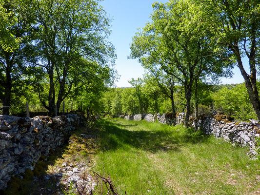 11Les places - Entres chênes et murets de pierre© Lot Tourisme - C. Sanchez