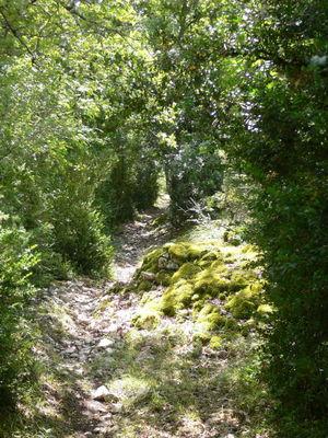 Francoulès : Chemin en Sous Bois
