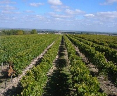 vigne domaine souleillan