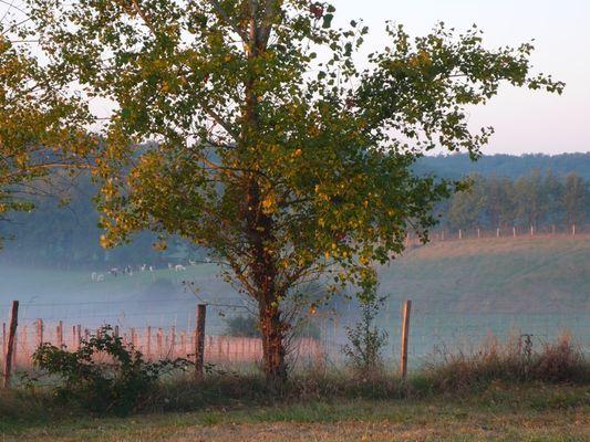 Alpagas du Quercy 12