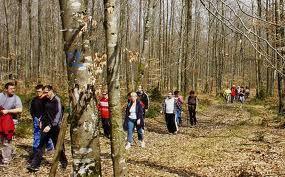 Balade Bois des Jonquilles