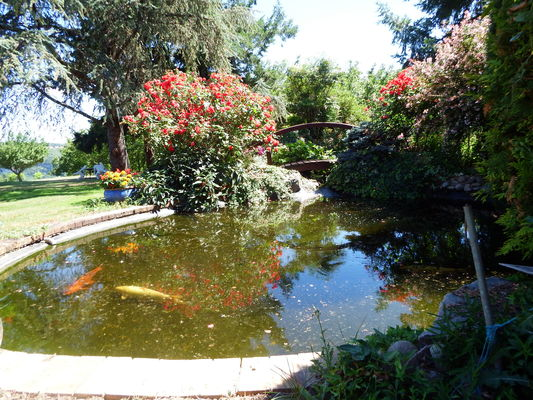 Bassin dans le jardin