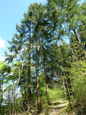 Biquinel - Forêt de pins_09 © Lot Tourisme - C. Sanchez
