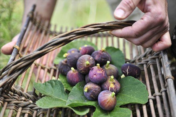 plateau des figues