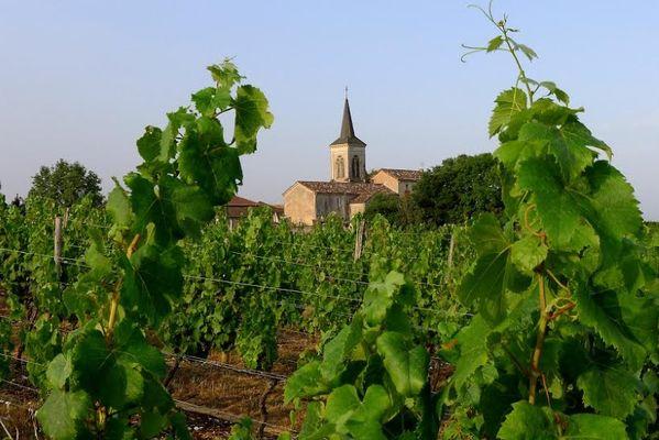 Vignoble de Cénac
