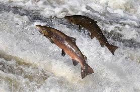 Chasse Pêche Nouzières