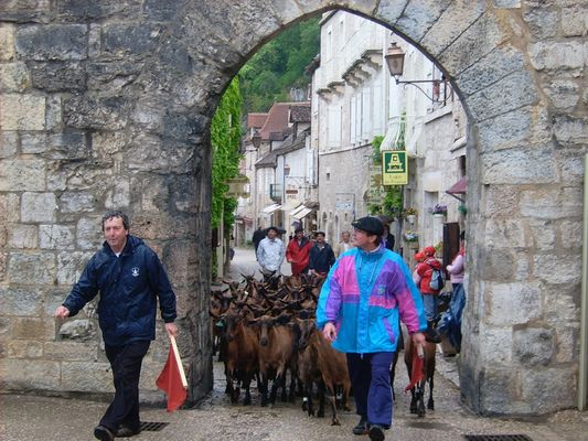 Chèvres Porte du Figuier
