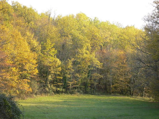 Bois Saint Chamarand