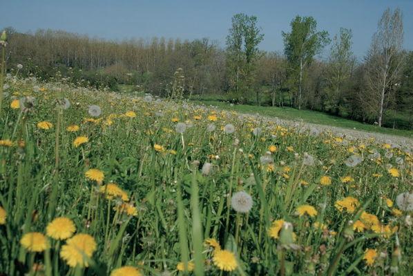 Prairie Fleurie en Limargue