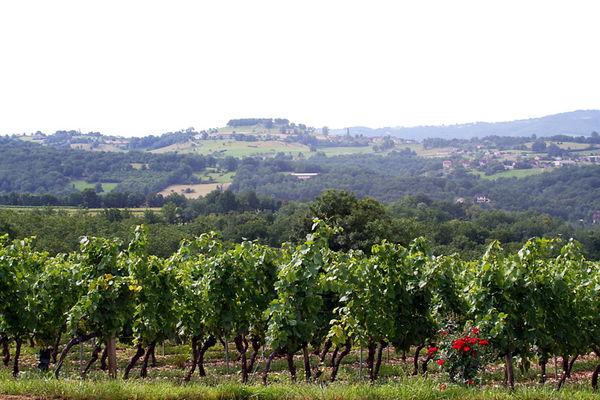 Glanes - Vue sur le Vignoble