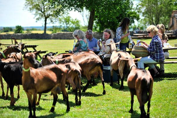 DEGMIP046V5007TH_La borie d'Imbert - pique-nique au milieu des chèvres