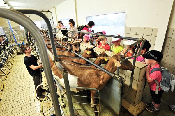 DEGMIP046V5007TH_La borie d'Imbert - traite des chèvres