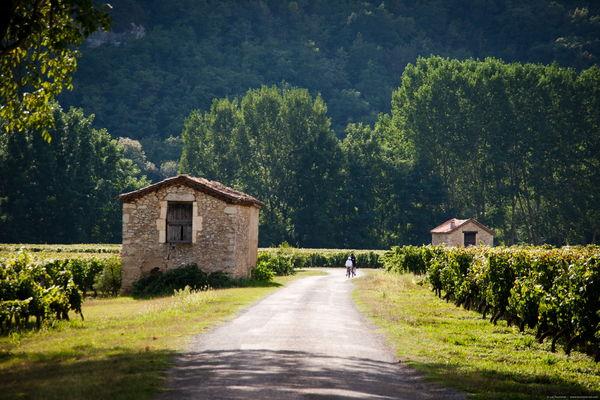Luzech - Dans les Vignes
