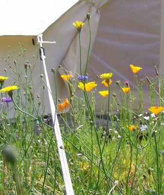 Espace Champetre - St Sylvain-fleurs-tente