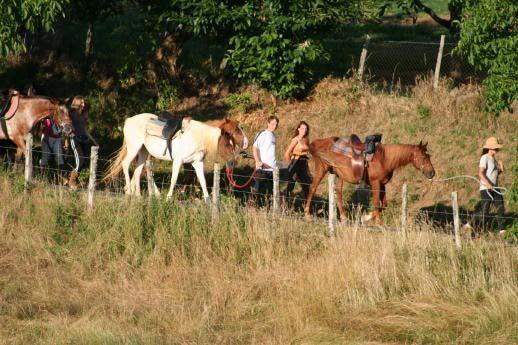 Ferme équestre de Lafontaine - Montcléra