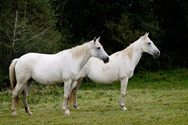 FermeEquestreDuMialaret-Camps_chevaux