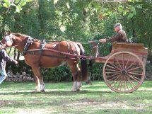 FermeEquestreRocamadour_cheval&caleche