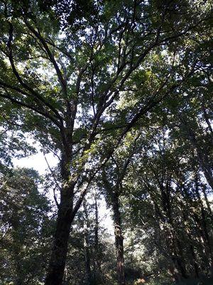 Forêt©Rachel Puyo
