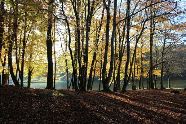 Forêt Ségala®Mouret