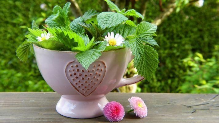 Herbe et Fleur c Pxhere