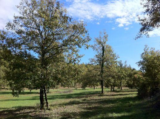 Lalbenque : Truffière
