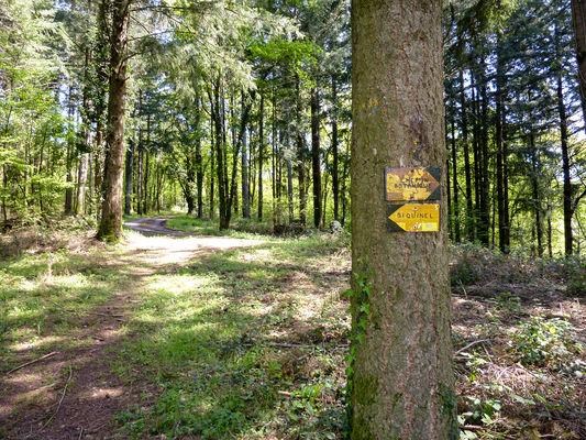 Latouille-Lentillac - Passage en sous bois_10 © Lot Tourisme - C. Sanchez