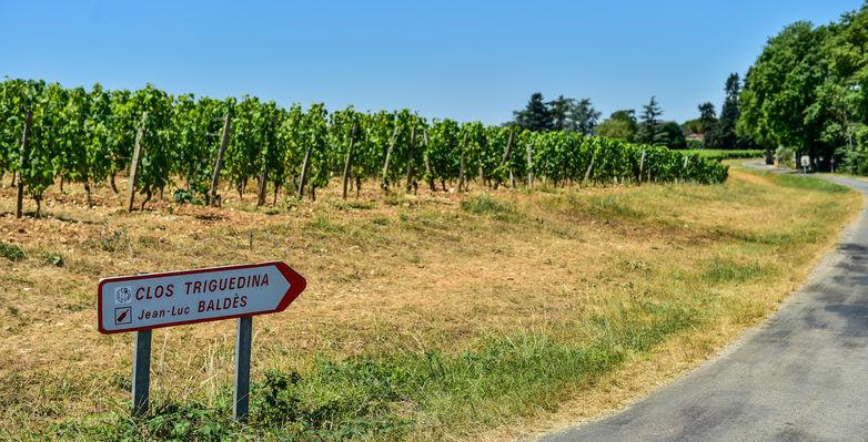 Les vignes du Clos Triguedina_14 © Lot Tourisme - C. ORY