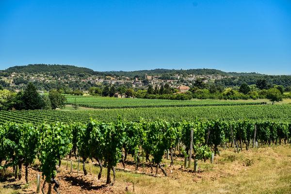 Les vignes du Clos Triguedina avec vue sur Puy L'Evêque_15 © Lot Tourisme - C. ORY