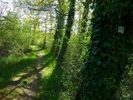 Marais de Bonnefont - Sentier sous les arbres © Lot Tourisme - C. Sanchez