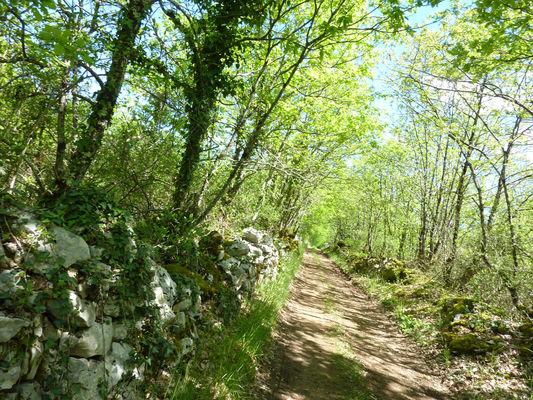 Mayrinhac le Francal - Murets de pierres sèches_18 © Lot Tourisme - C. Sanchez