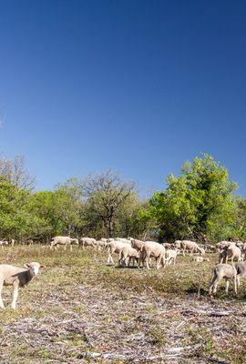 OK- Table-ronde 10 mai Floirac- Moutons sur le Causse © Lot Tourisme C. Novello