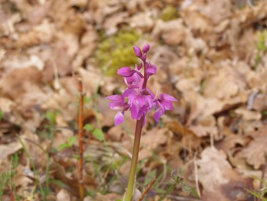Orchidée©OT Lot-Vignoble- Rachel Puyo
