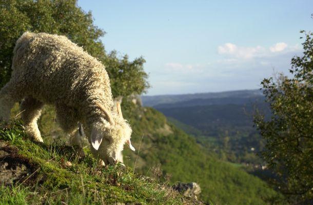 PCUMID046FS00009_1 Ferme de Siran-Chevreau et paysage©GaelleTaillefer