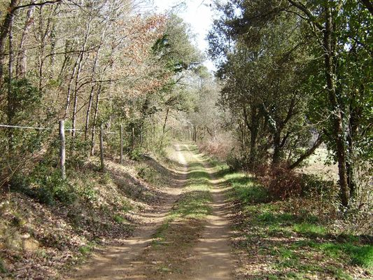 Saint - Cirq Madelon : Chemin Forestier