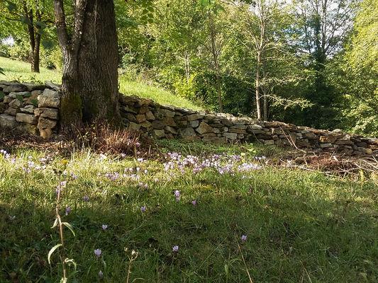 Parterre de Colchique au détour du chemin_18 © Lot Tourisme - A. Leconte