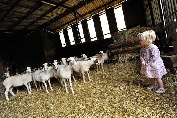 Rencontre à la ferme - Ferme de la Brebis Bavarde à Albiac_06 © Lot Tourisme - C. ORY